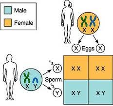 طرق تحديد نوع الجنين بشكل علمي