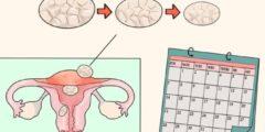 حاسبة التبويض وكيفية معرفة موعد التبويض بدقة لزيادة فرص الحمل